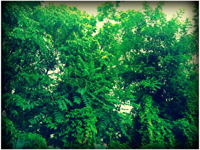 peaceful greens